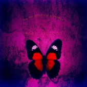 All the While the Butterfly
