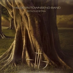 Synchestra