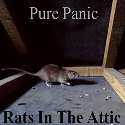 Rats in the Attic